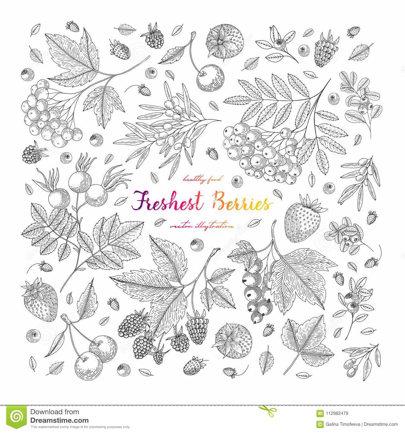 Square illustration frame with currant, blueberry, cranberry, goji, raspberry, strawberry. Detailed vegetarian food