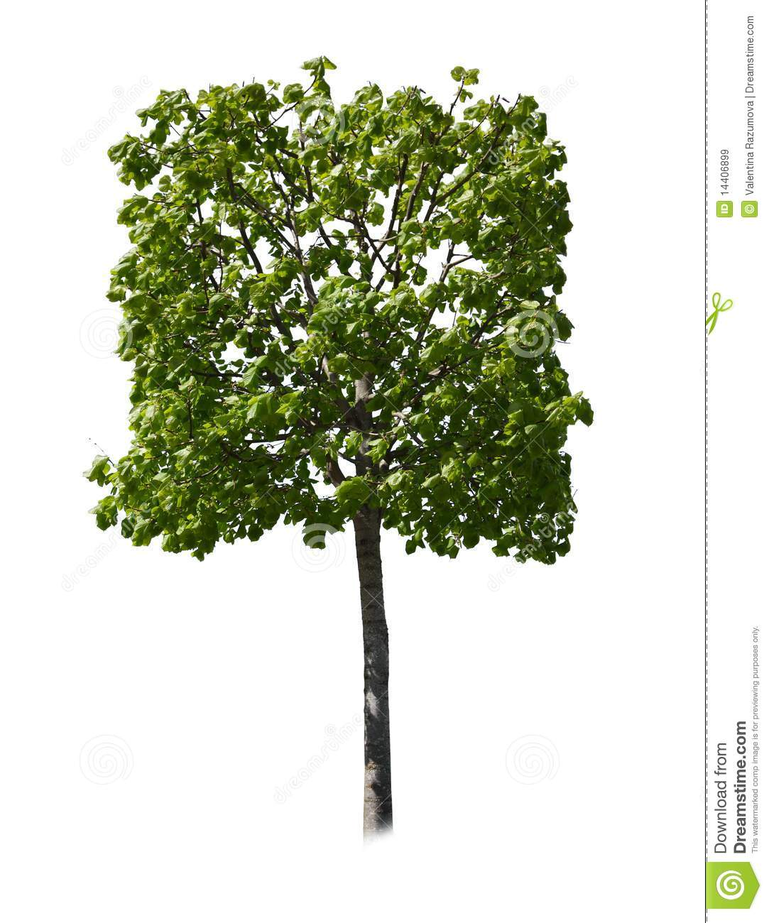 Square Tree Royalty Free Stock Images  Image 14406899