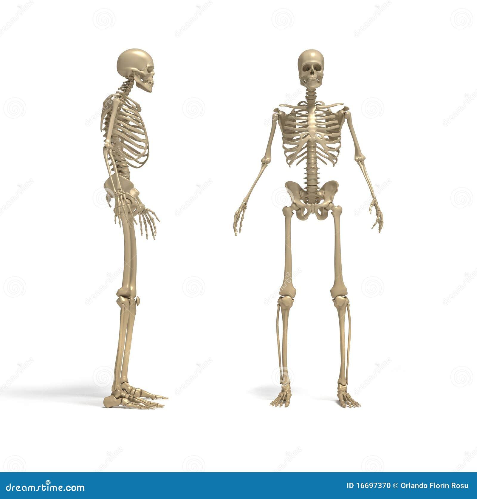 Squelette Photo Stock Image 16697370