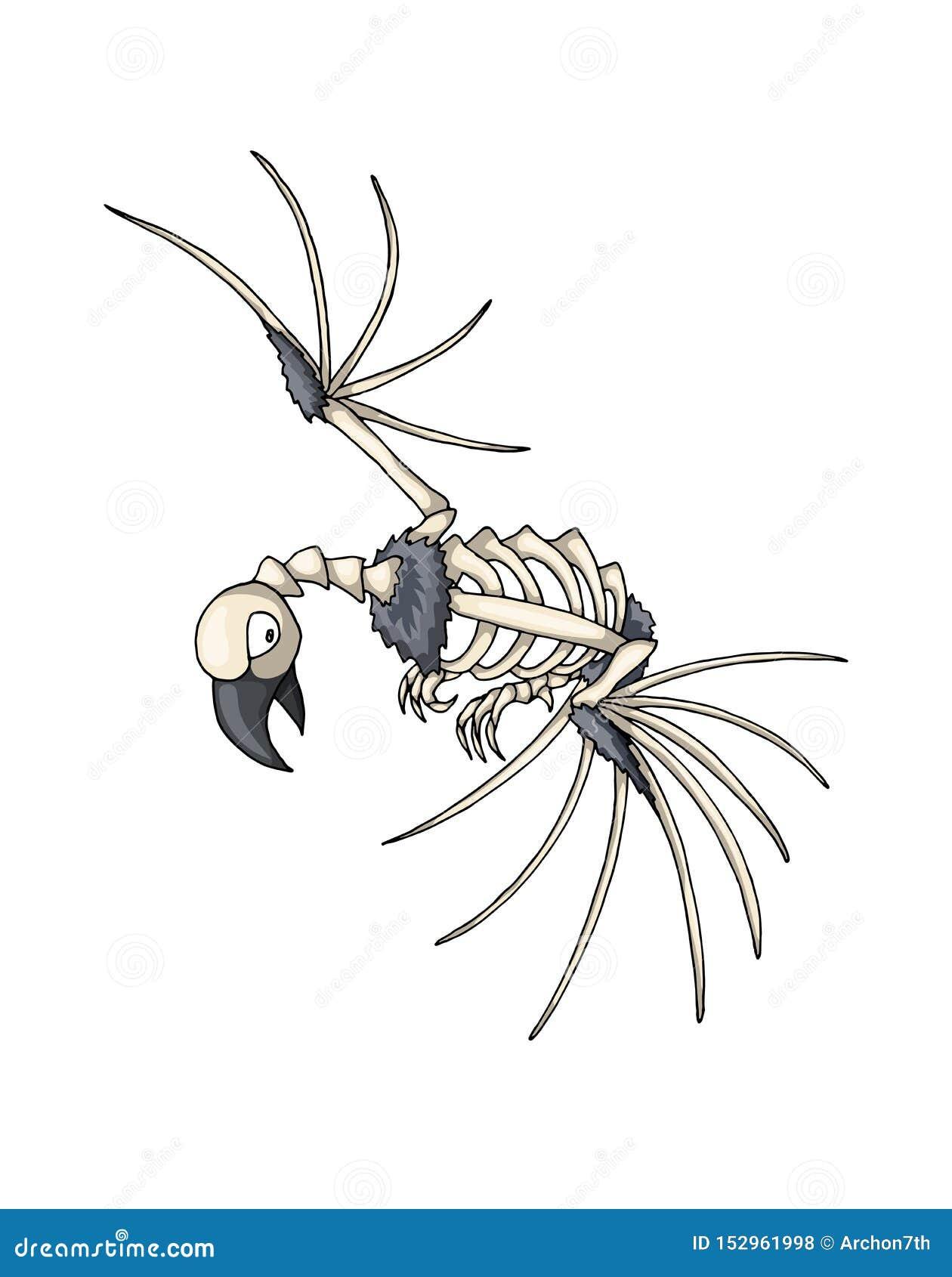 Squelette d oiseau Objet d isolement de vecteur sur le fond blanc