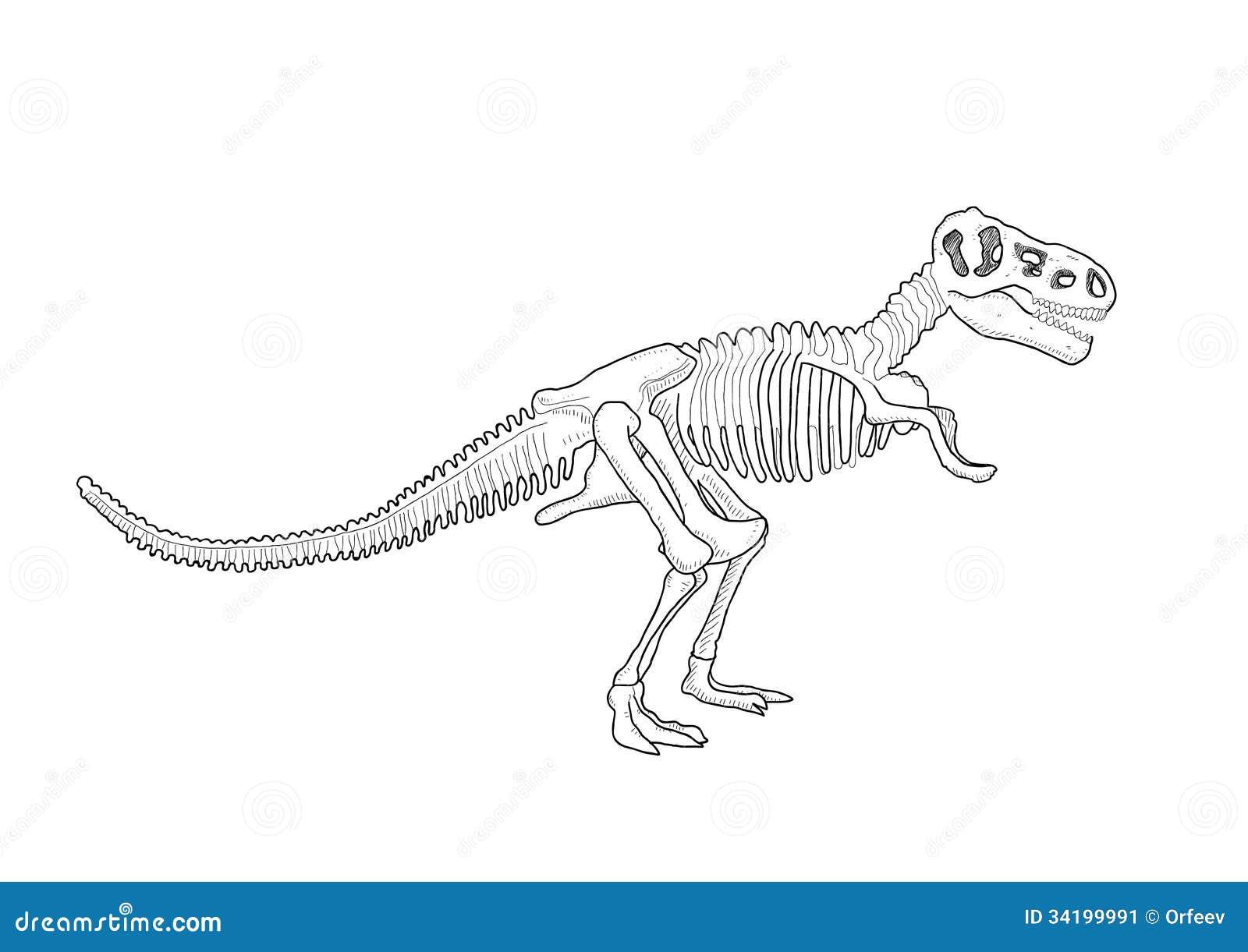 Squelette de dinosaure illustration de vecteur illustration du dessin 34199991 - Modele dessin dinosaure ...