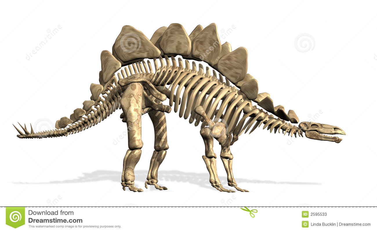 Squelette de Stegosaurus