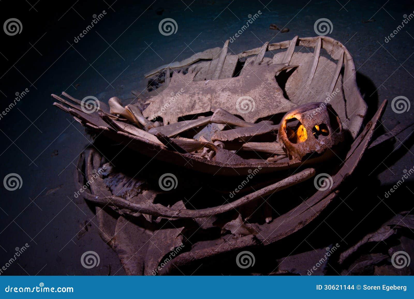Squelette de tortue verte avec le cav int rieur sous marin for Interieur sous marin