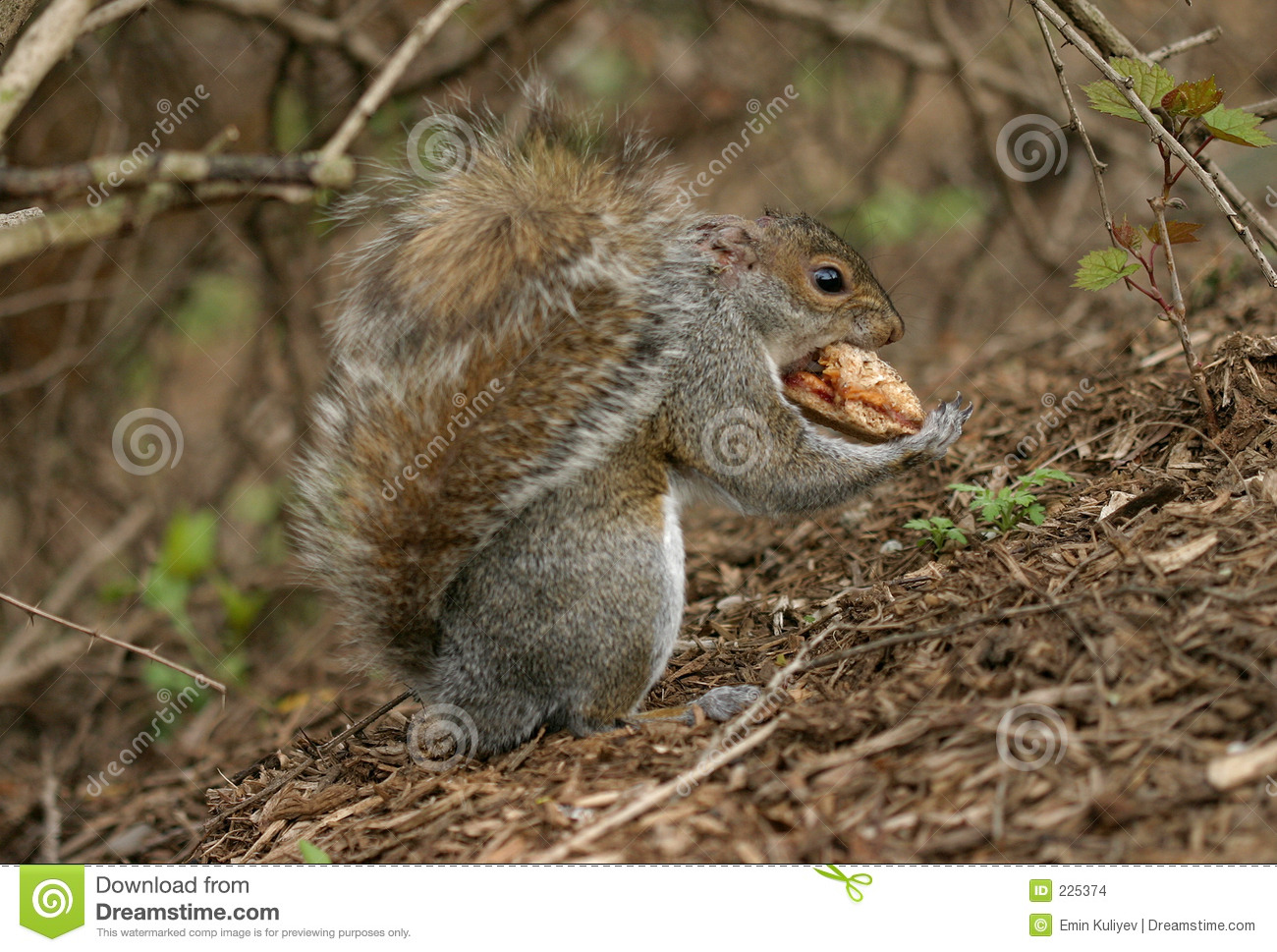 Download Squirrel stock photo. Image of spring, cute, smile, breakfast - 225374