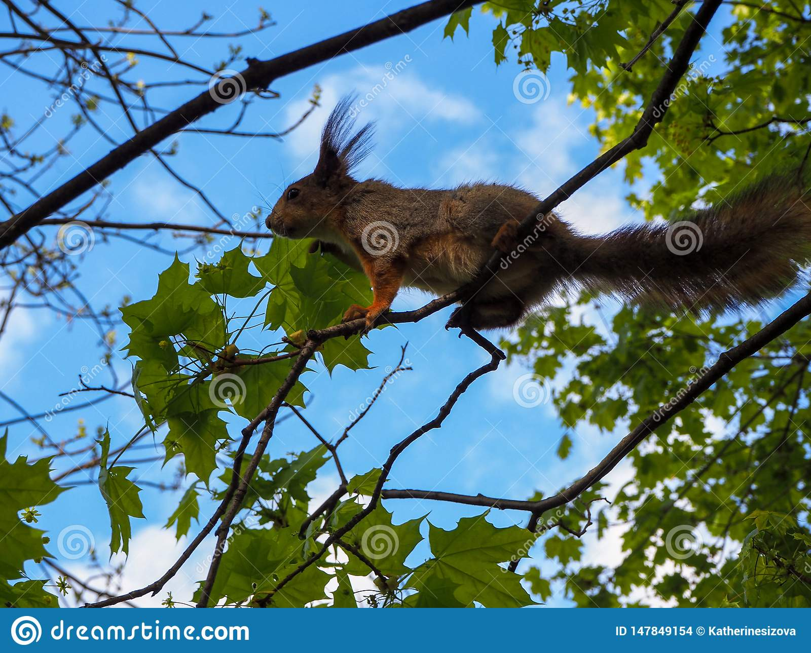 A squirrel is climbing on the tree branches