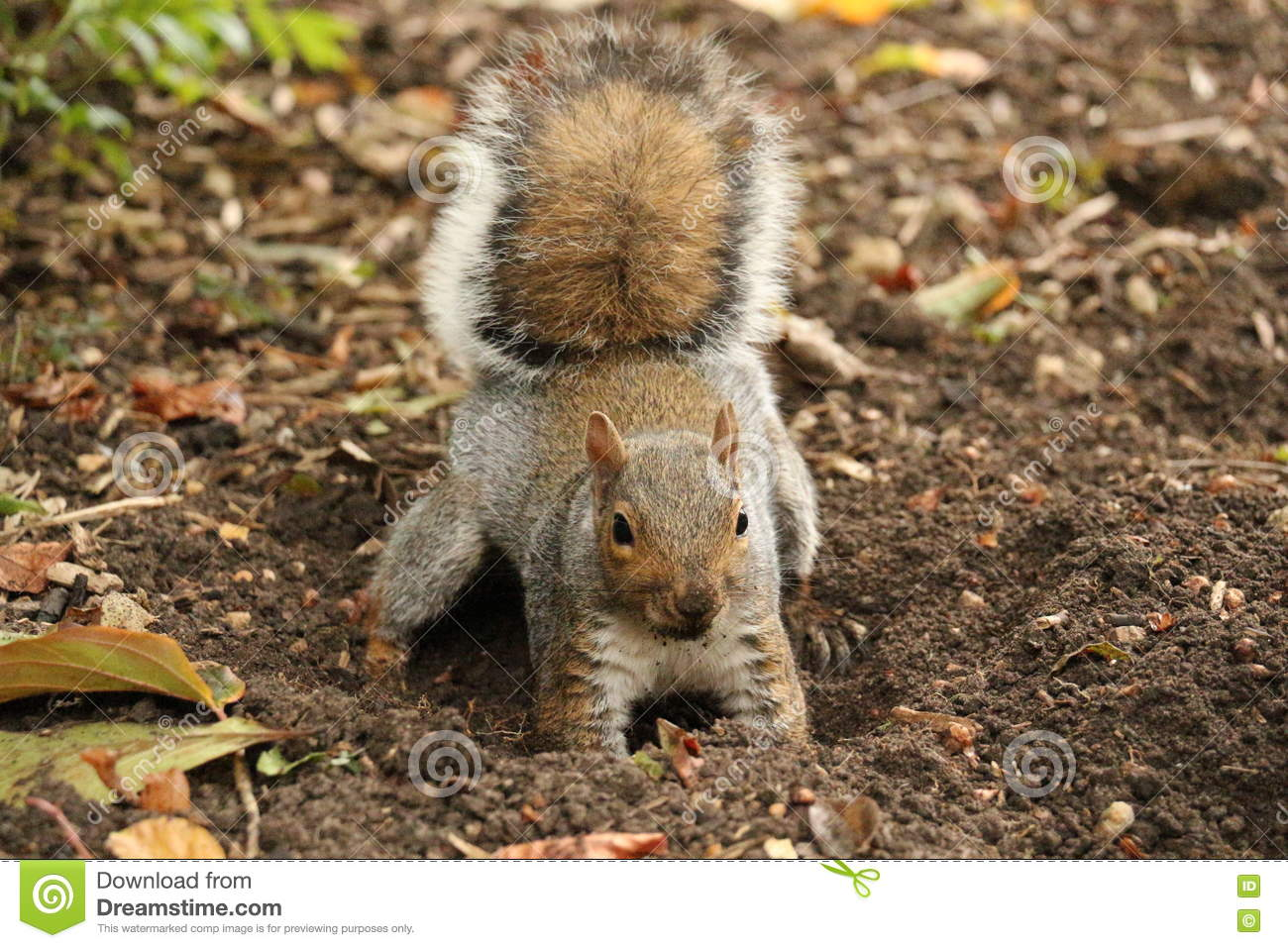 Green accorns in oak tree automn royalty free stock photo - How to keep squirrels from digging in garden ...