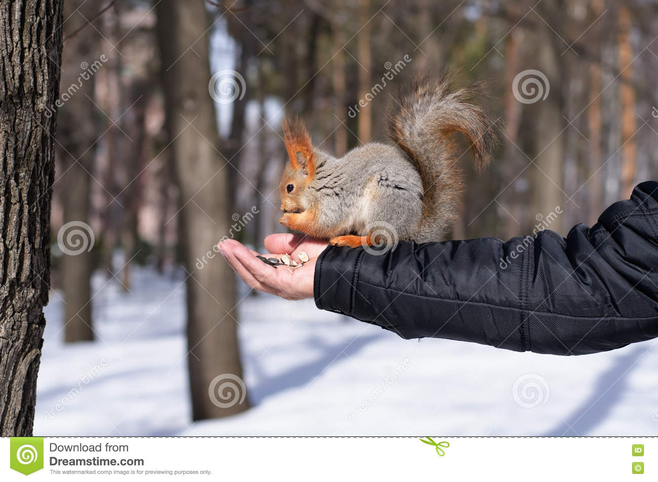 squirrel single guys Squirrel's best 100% free singles dating site meet thousands of singles in squirrel with mingle2's free personal ads and chat rooms our network of single men and women in squirrel is the perfect place to make friends or find a boyfriend or girlfriend in squirrel.