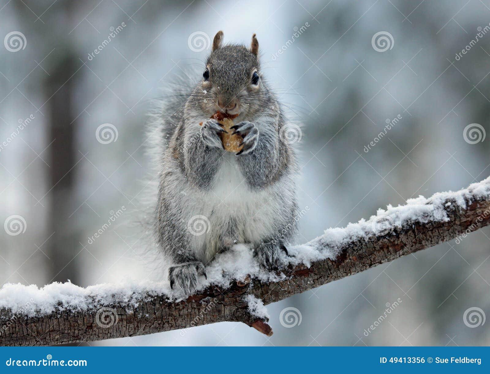 Squirrel Enjoying a Nut