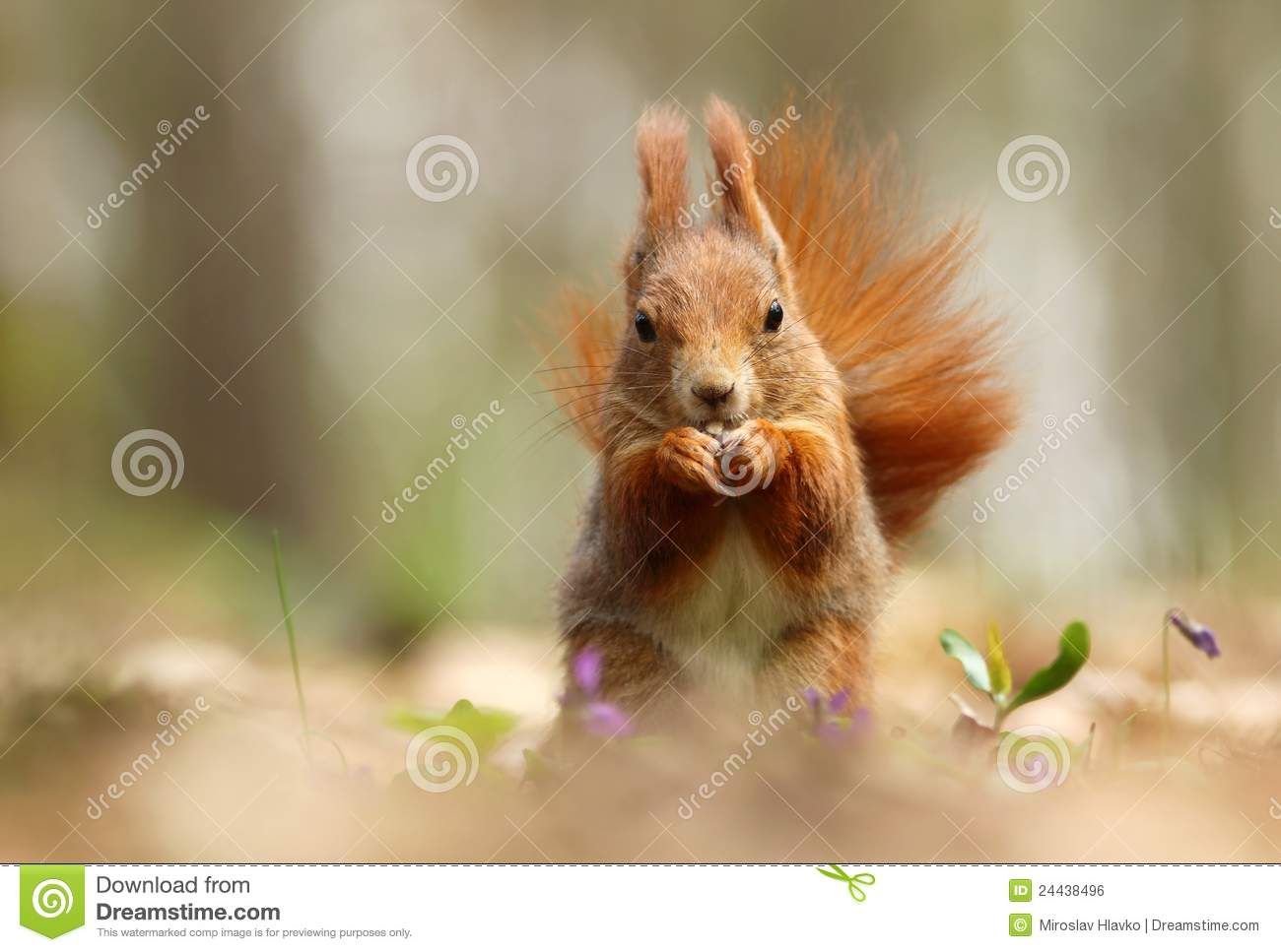 how to stop squirrels from eating flowers
