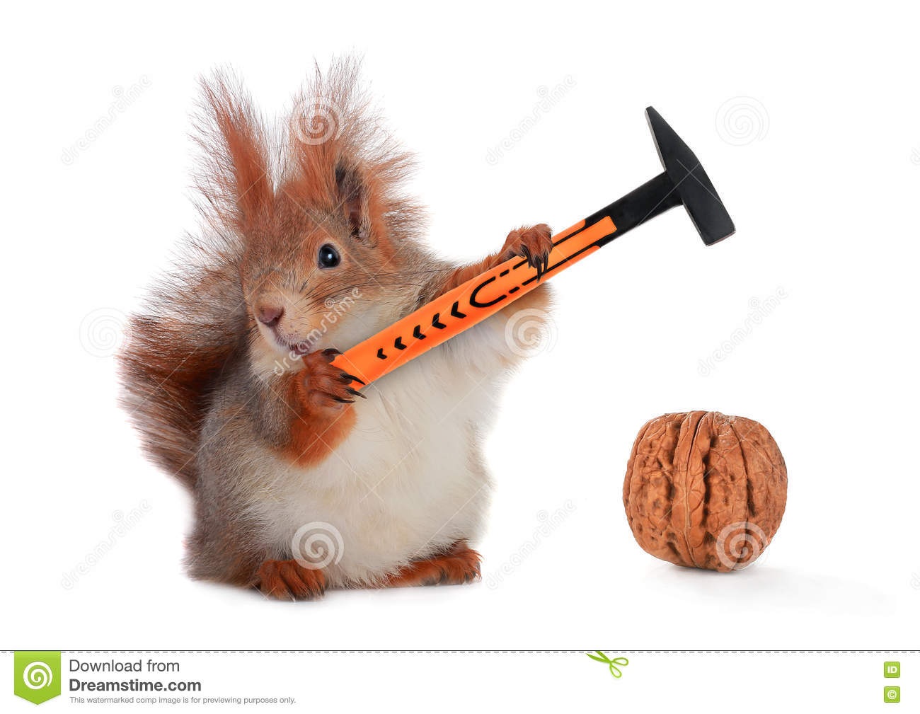 Squirrel stock photo. Image of home, design, mammal, gl - 77611960 on snow home, santa home, tree stump home, rat home, hedgehog home, turkey home, bee home, horse home, monkey home, flowers home, chipmunk home, frog home, turtle home, bear home, duck home, hummingbird home,