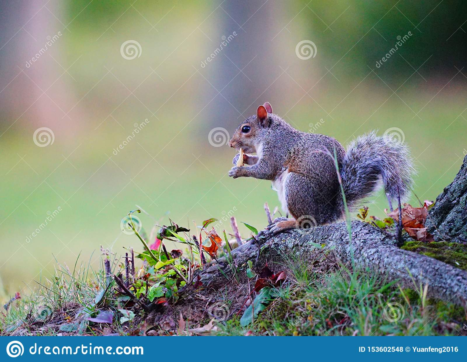 Squirrel having snack