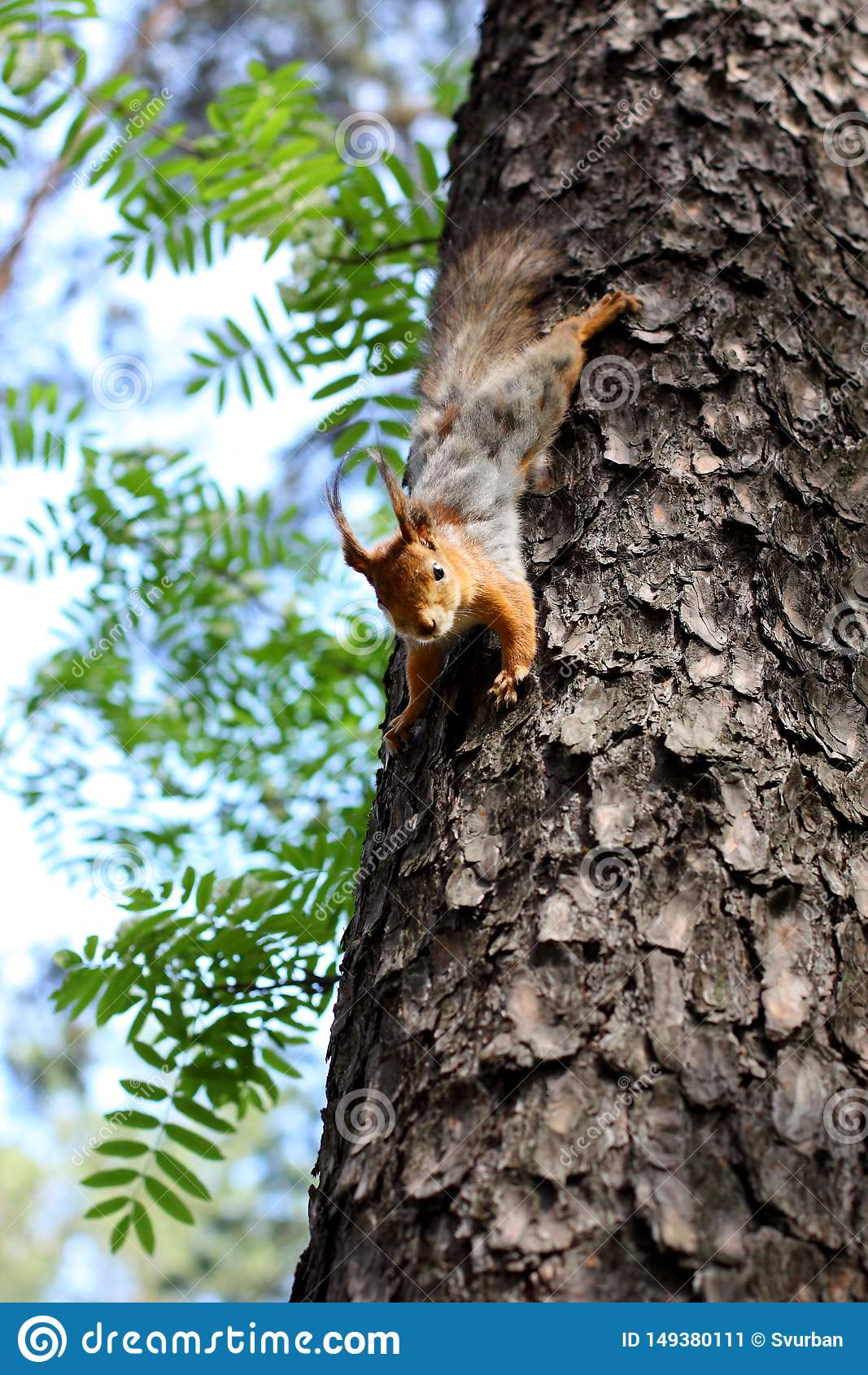 Squirrel jumping on a tree in the forest in summer