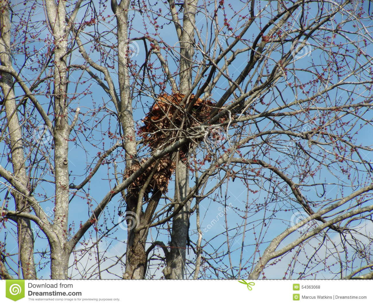 how to make squirrel nest