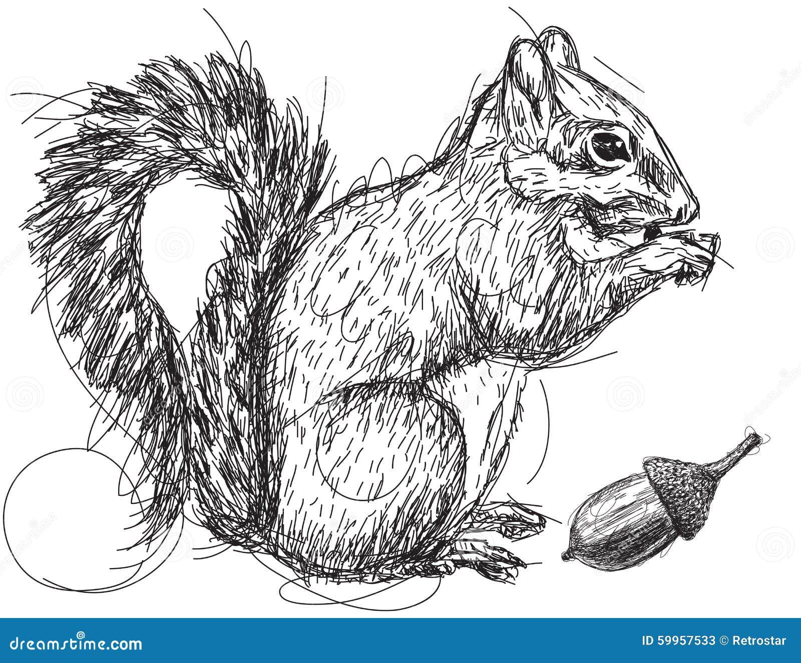 Squirrel nut sketch stock vector. Illustration of eating ...