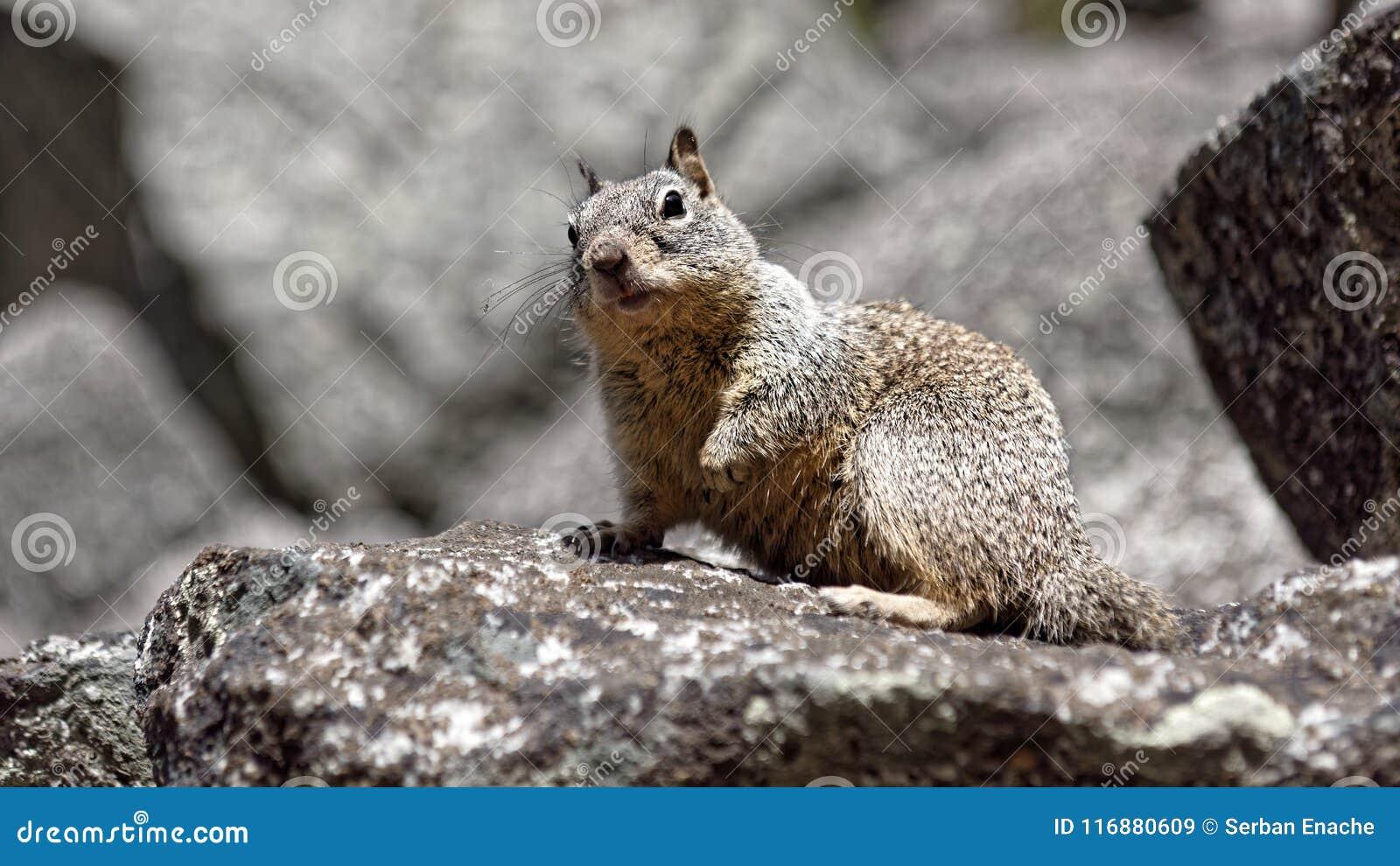 Squirrel at Yosemite Valley