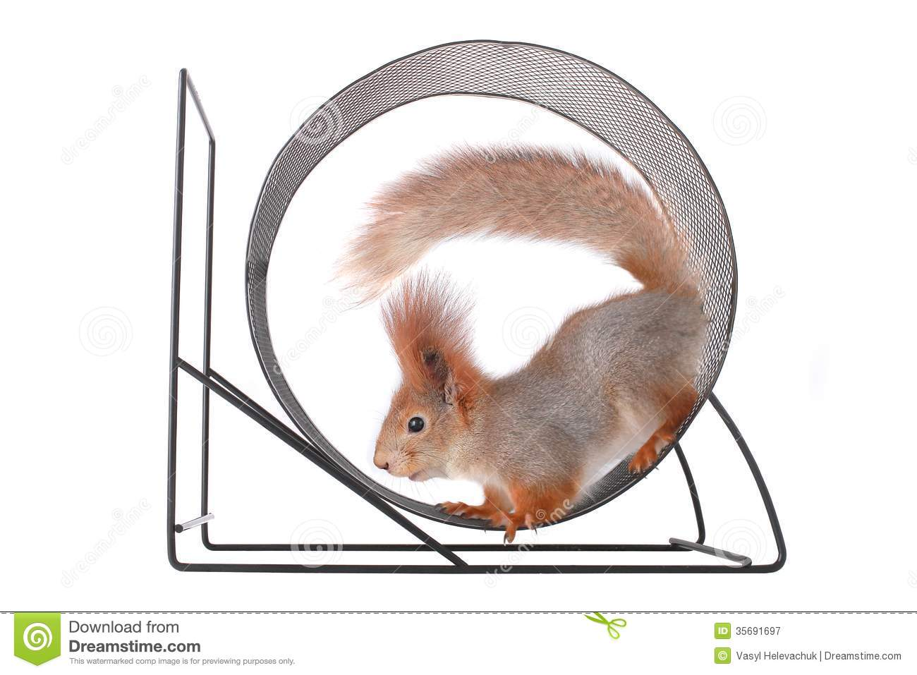 Squirrel Royalty Free Stock Photography Image 35691697
