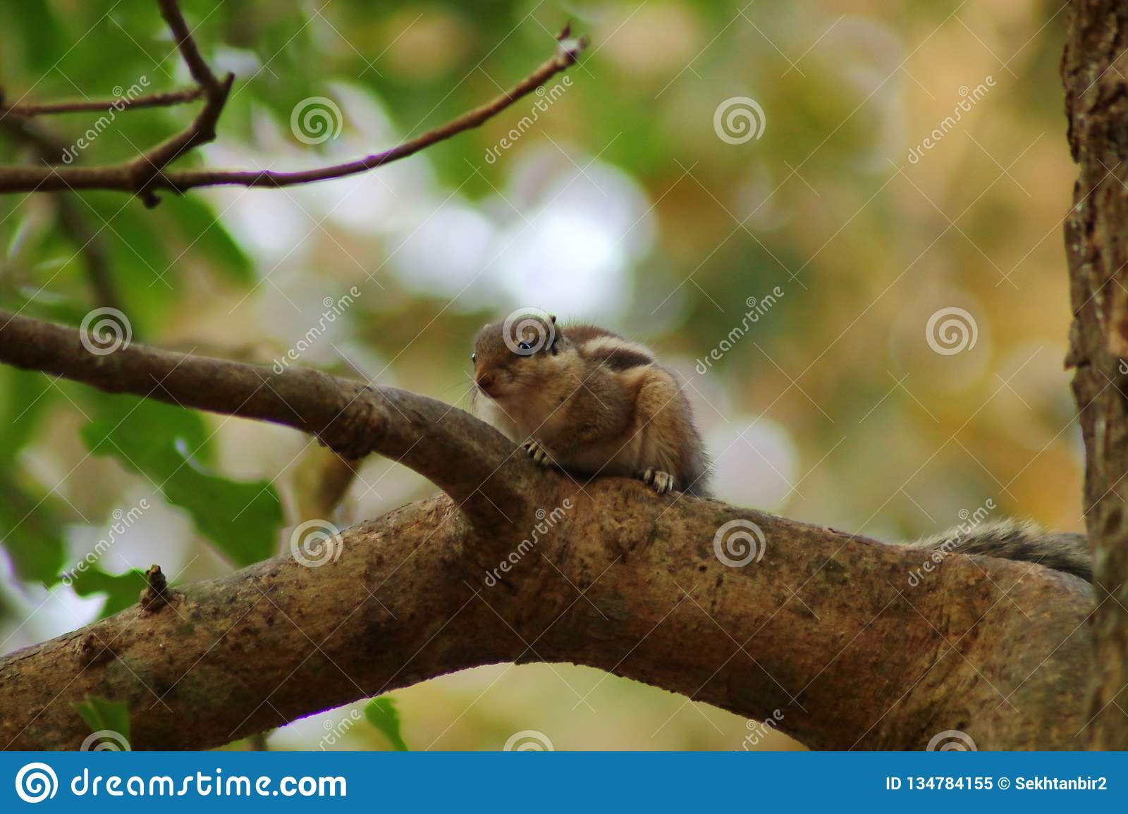 The Squirrel On The Tree Wallpaper