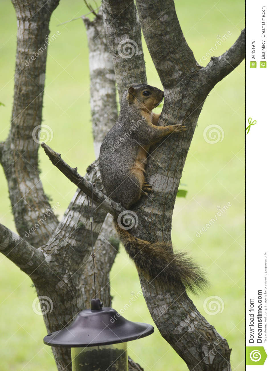 Squirrel trying to hide