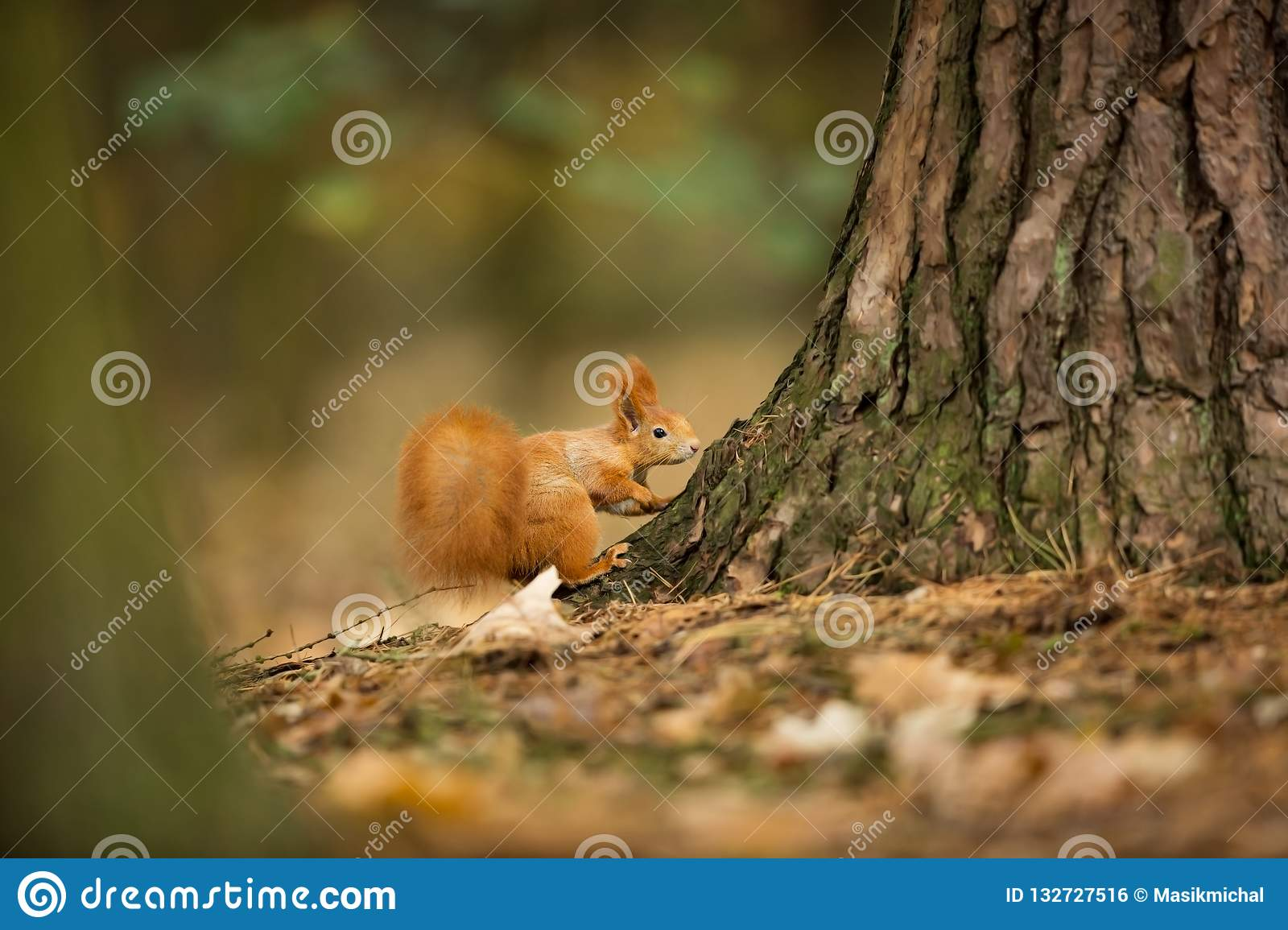 b088d0da1 The squirrel was photographed in the Czech Republic. Squirrel is a  medium-sized rodent.