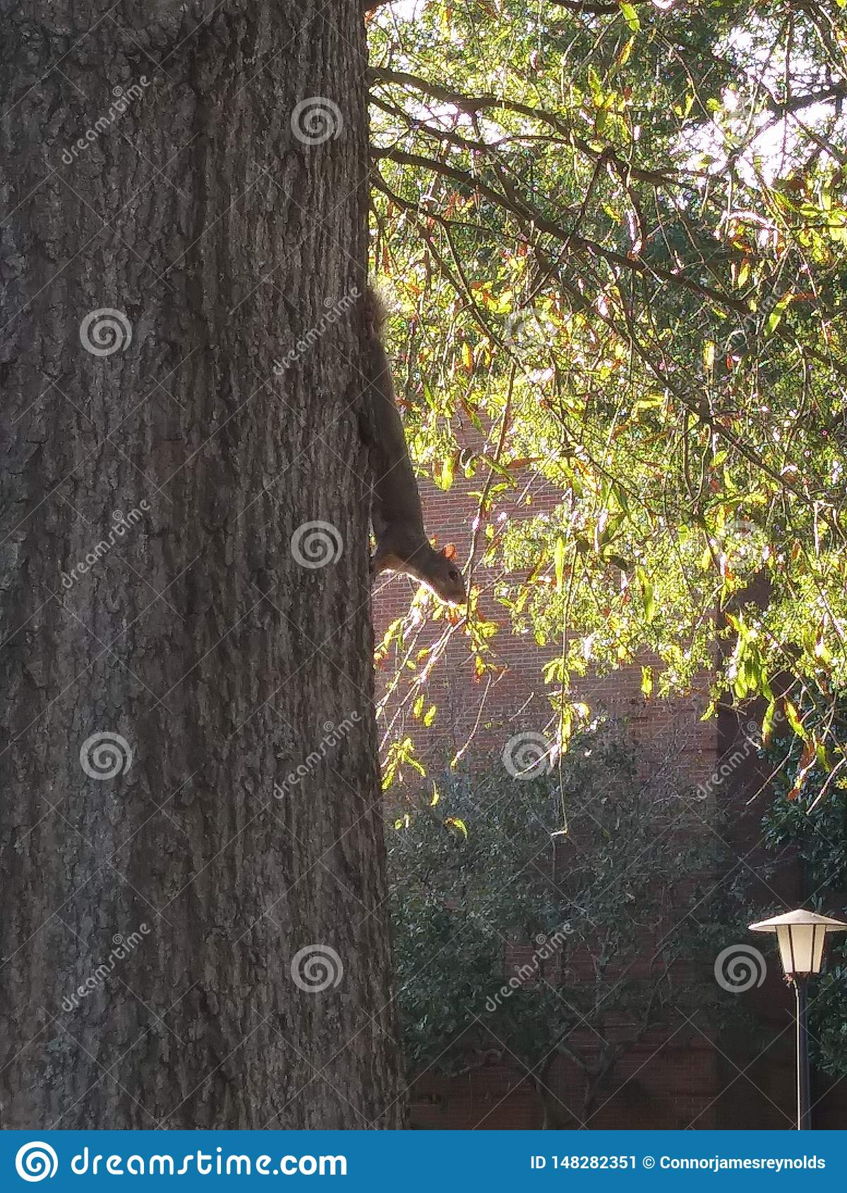 Squirrel watches from tree