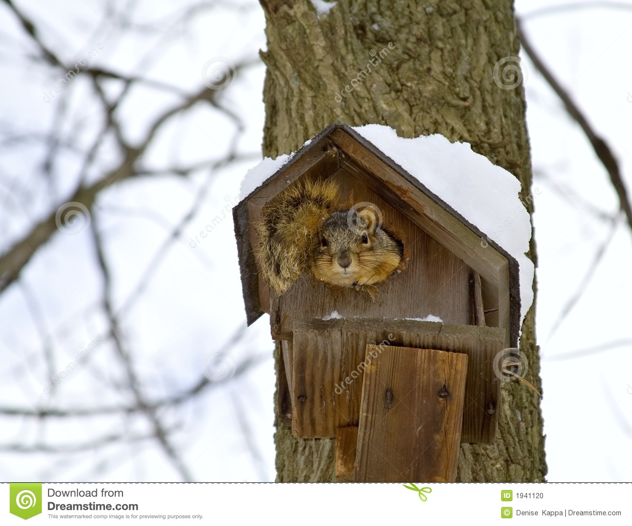 Excellent Squirrel Winter Home Stock Photo Image Of Shelter Mammal Download Free Architecture Designs Photstoregrimeyleaguecom