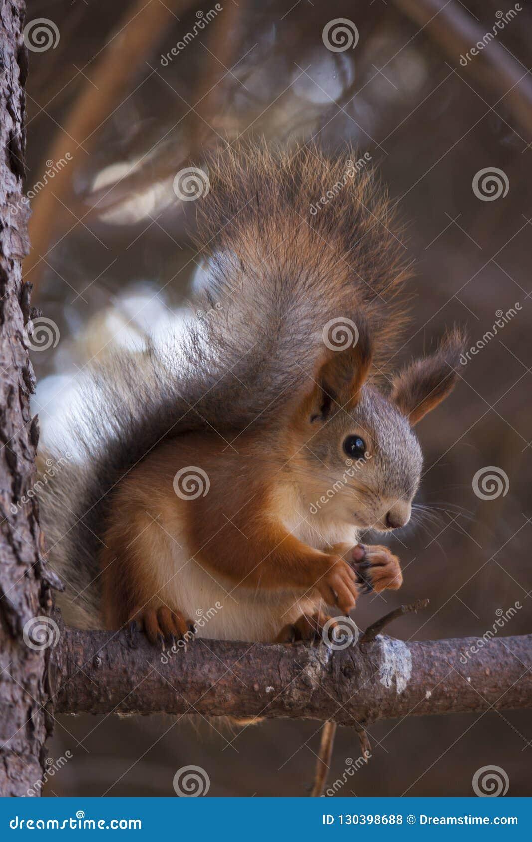 Squirrell на ветви