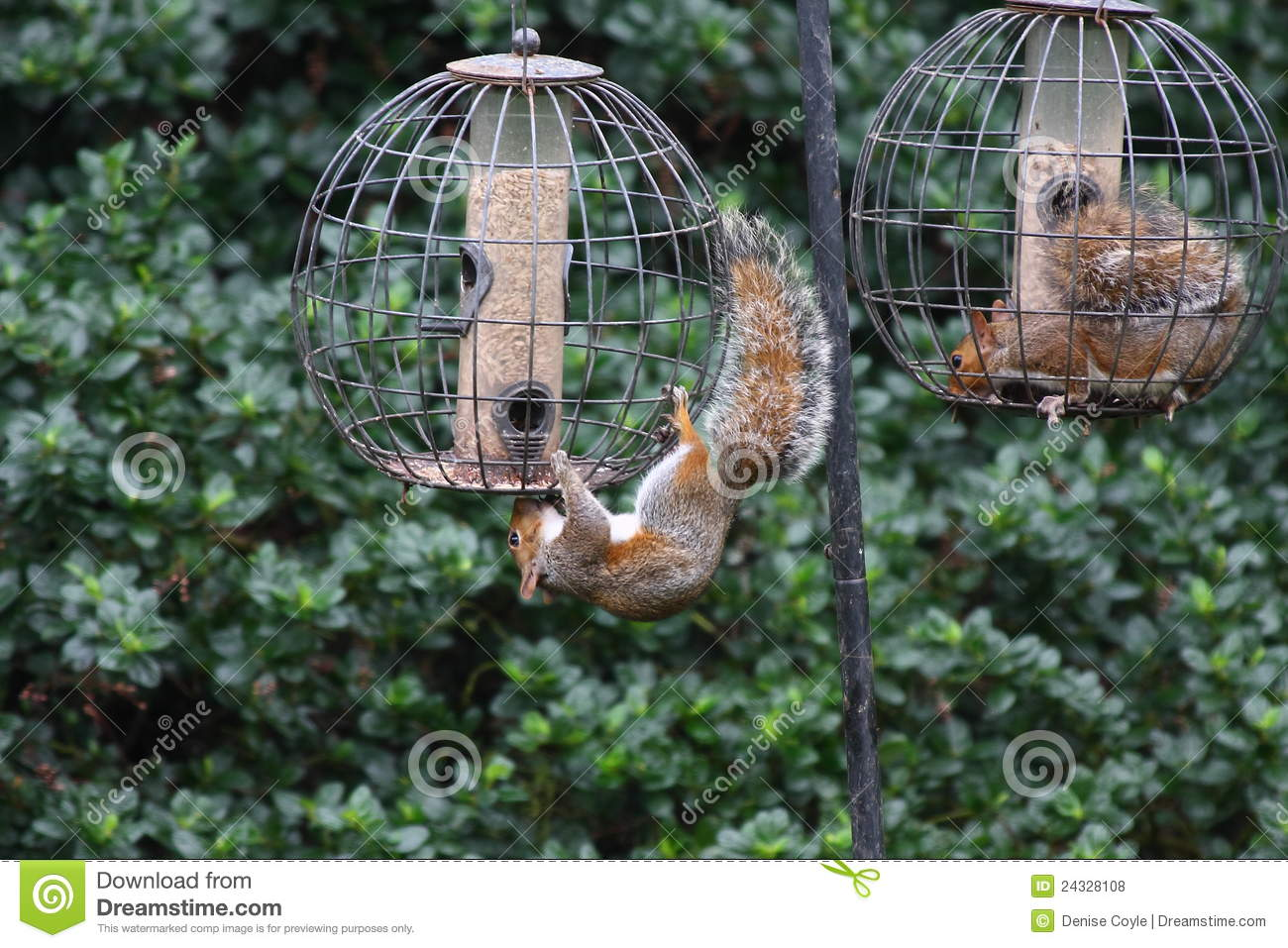 Free Squirrel Proof Bird Feeder Plans