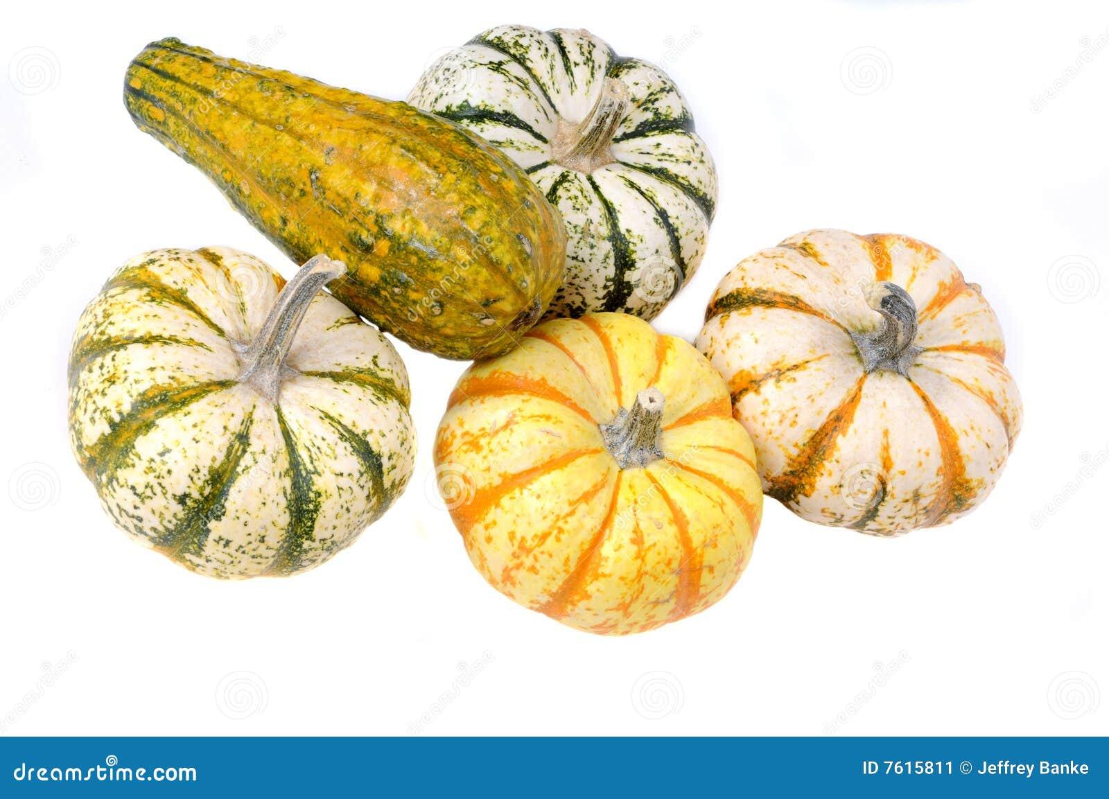 Sqush或金瓜种类