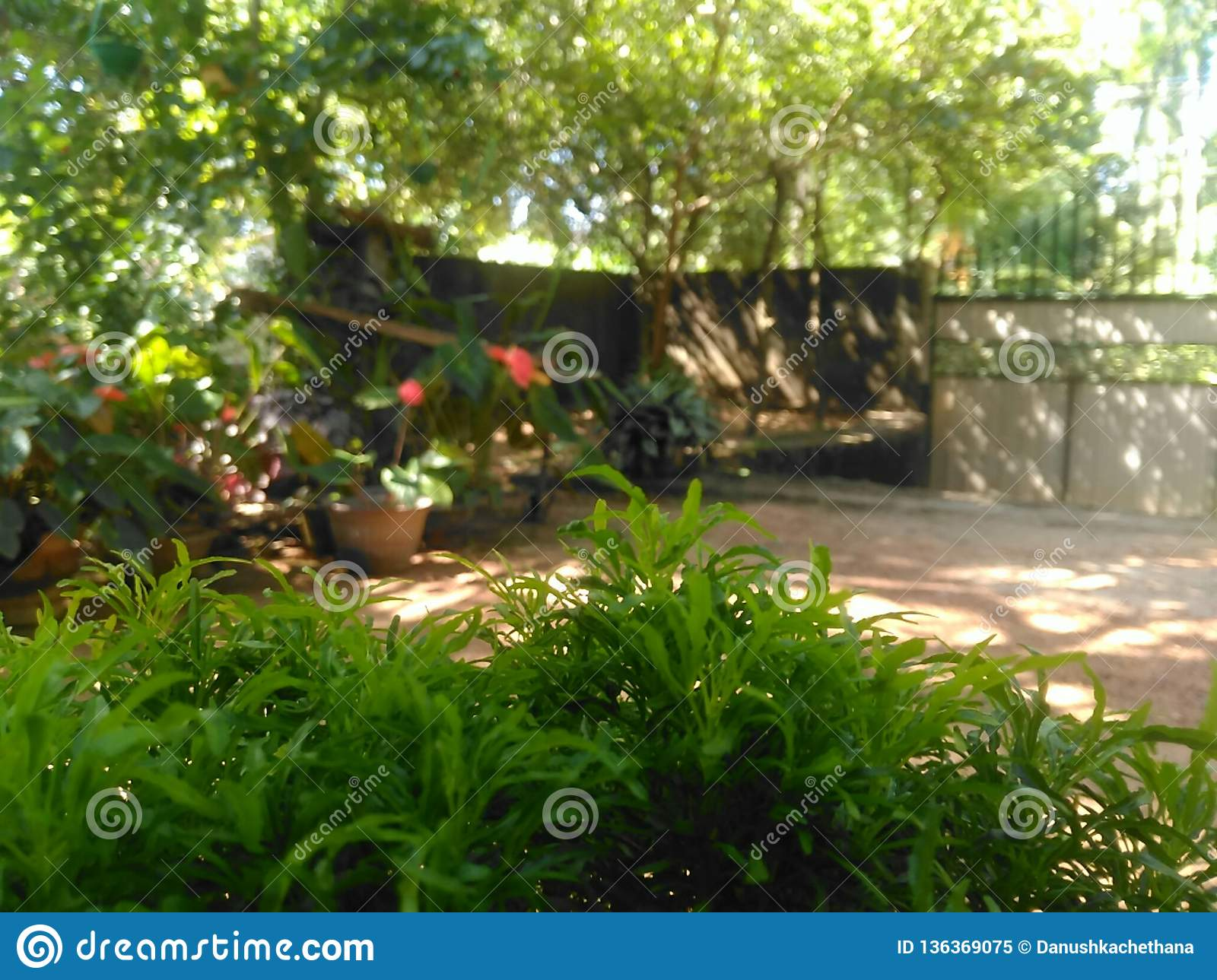 Sri Lanka Beautiful Home Garden Stock Image Image Of Print Nany 136369075