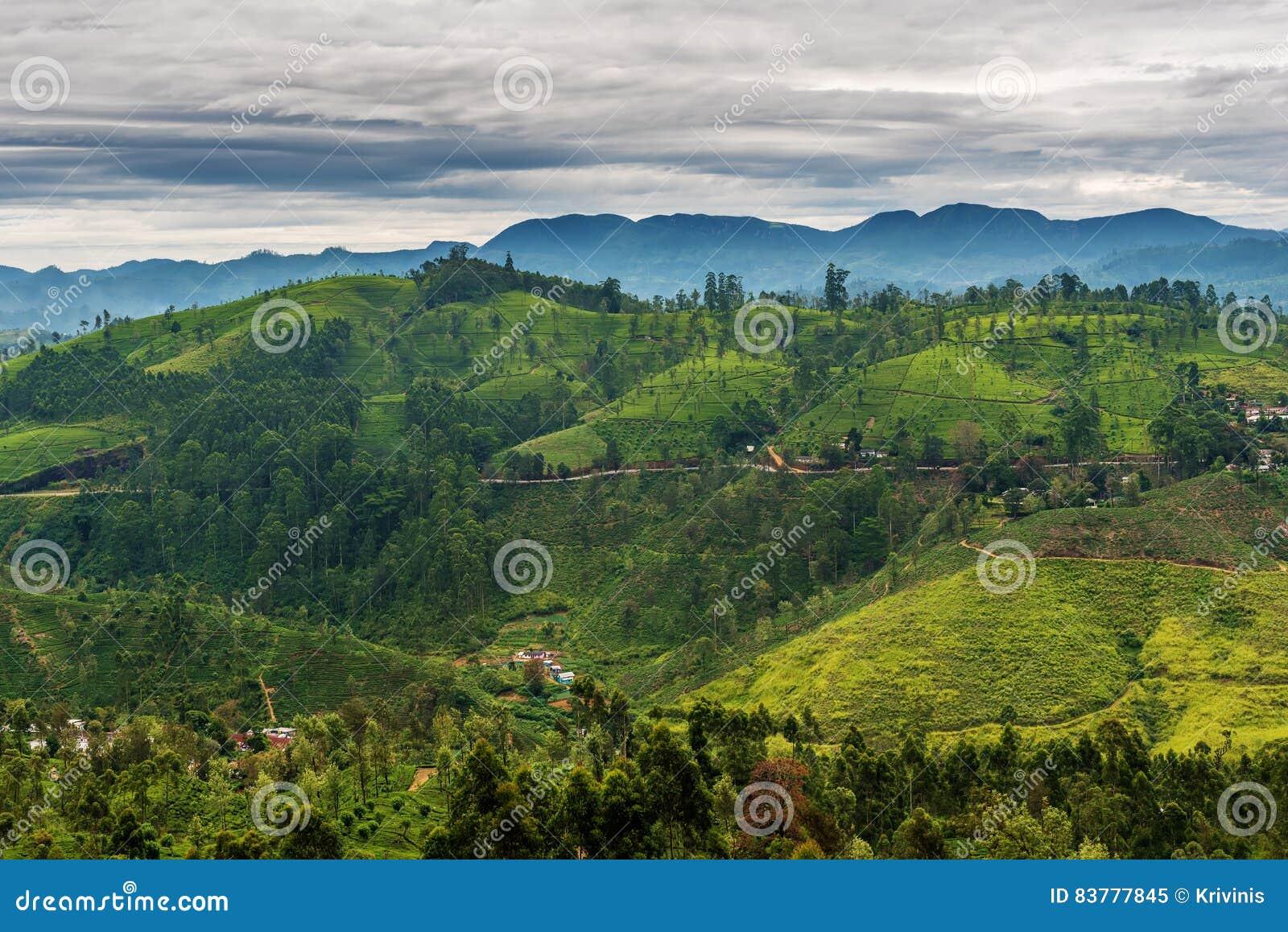 Sri Lanka: de beroemde gebieden van de het hooglandthee van Ceylon