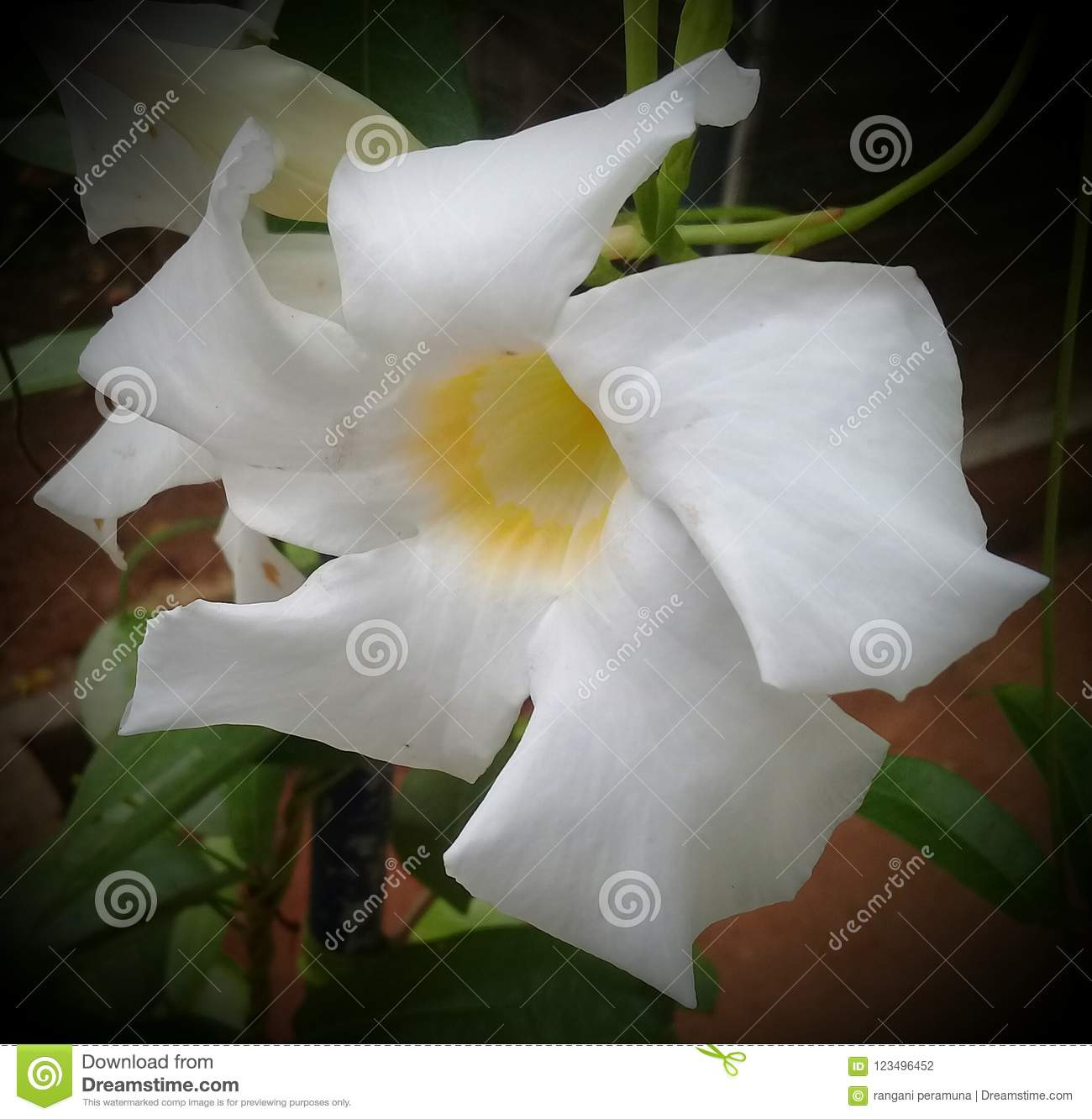 this is srilankan flower