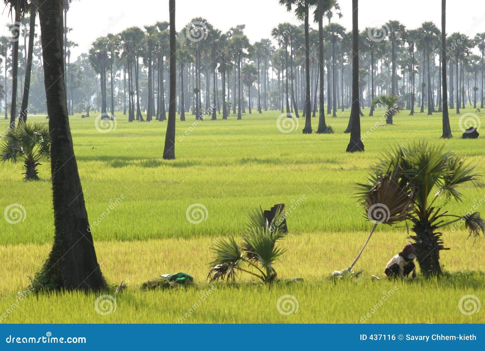 Srok Batheay, Cambogia 2005