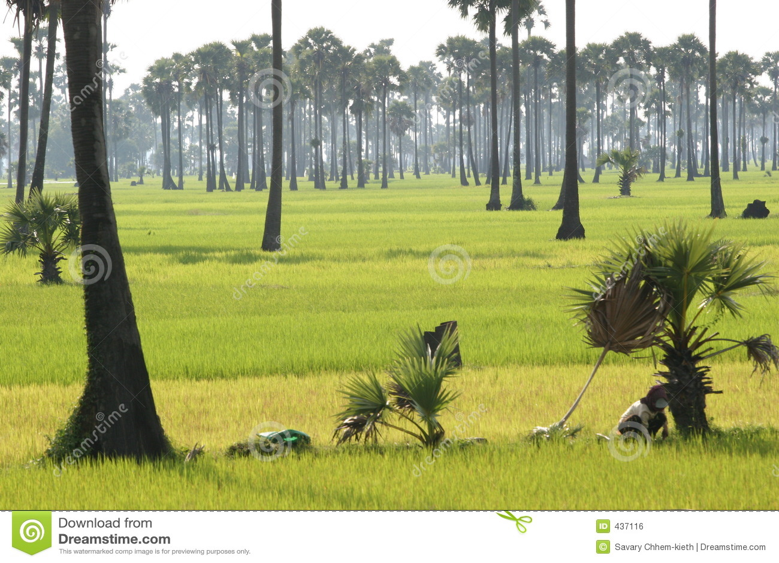 Srok Batheay, Camboya 2005