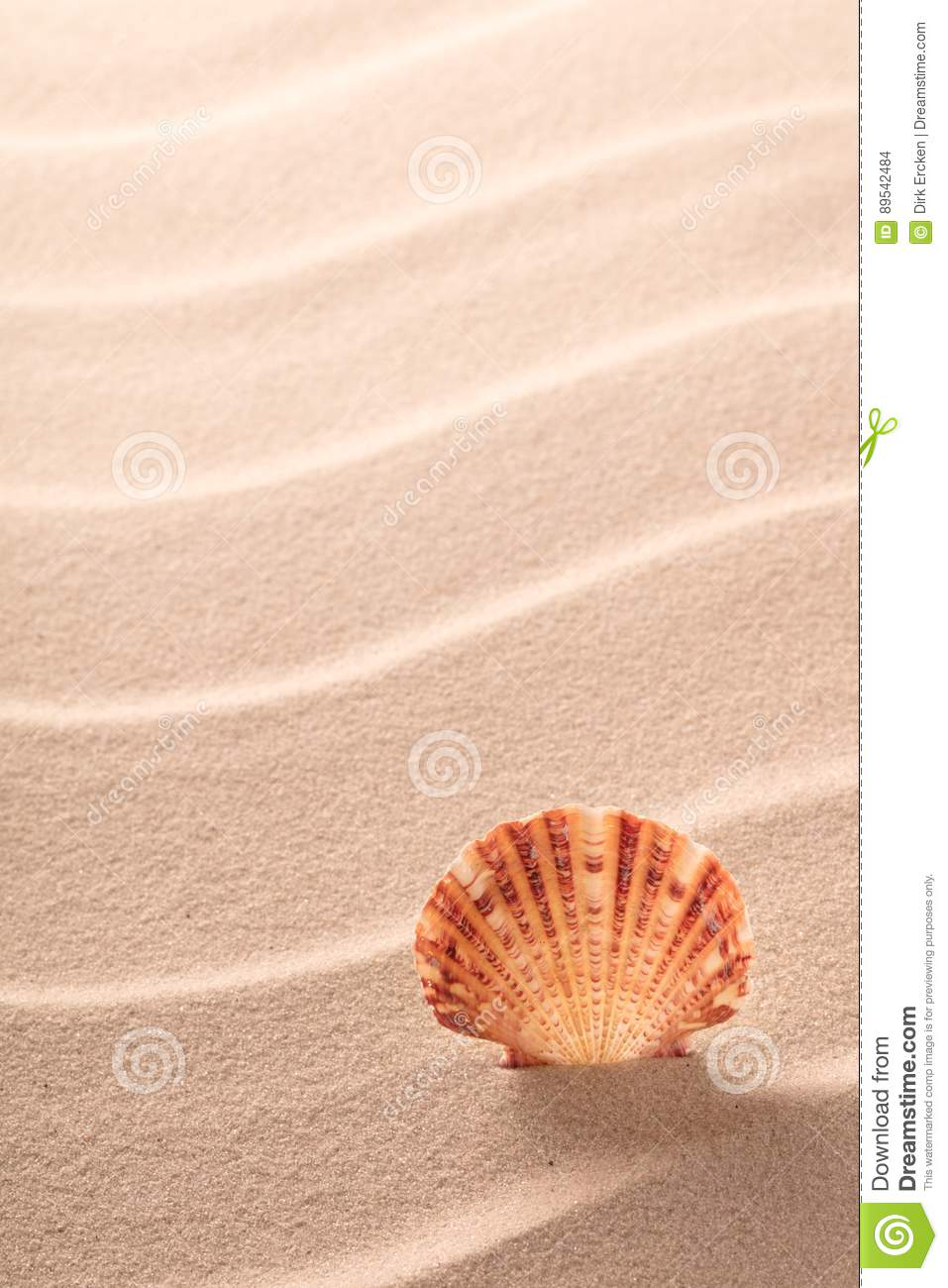 Sseashell standing in rippled beach sand