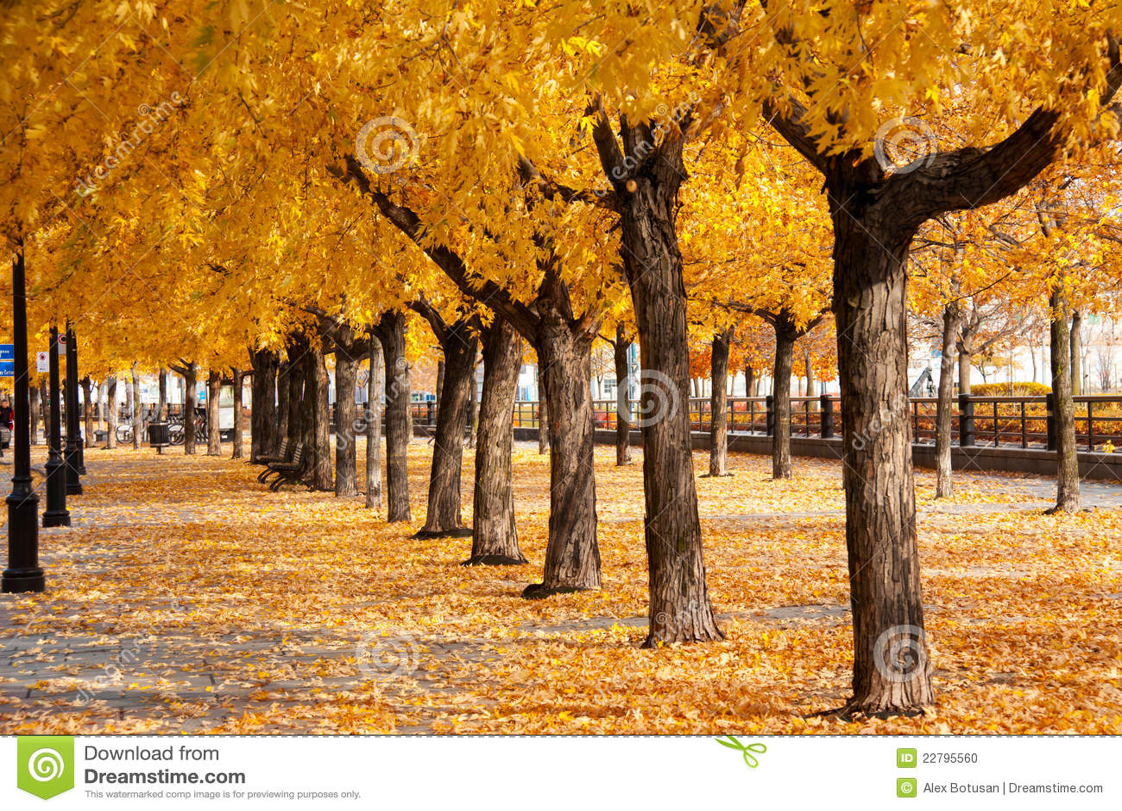Städtische Goldene Blätter Wölben Sich Und Legen Mit