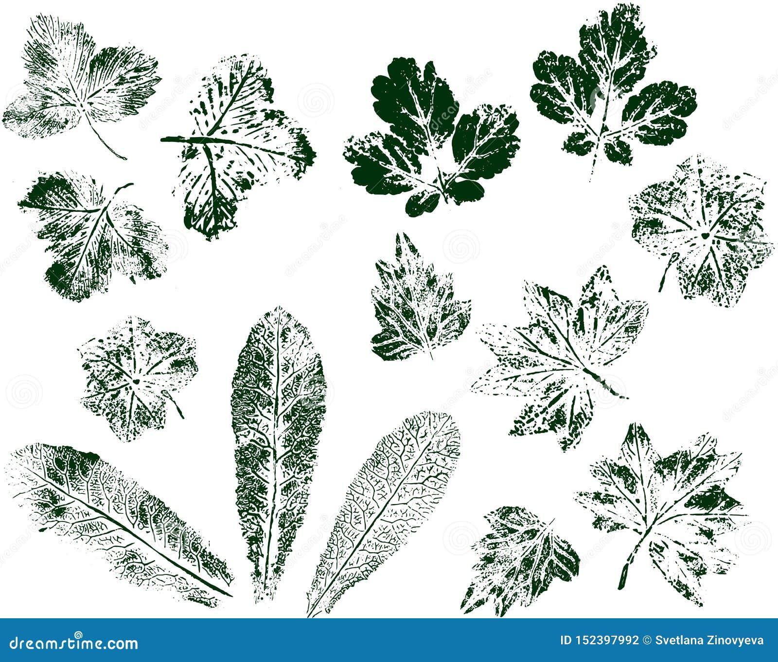 Ställ in av bladtryck som isoleras på vit bakgrund Grönt stämpelfärgpulver vektor