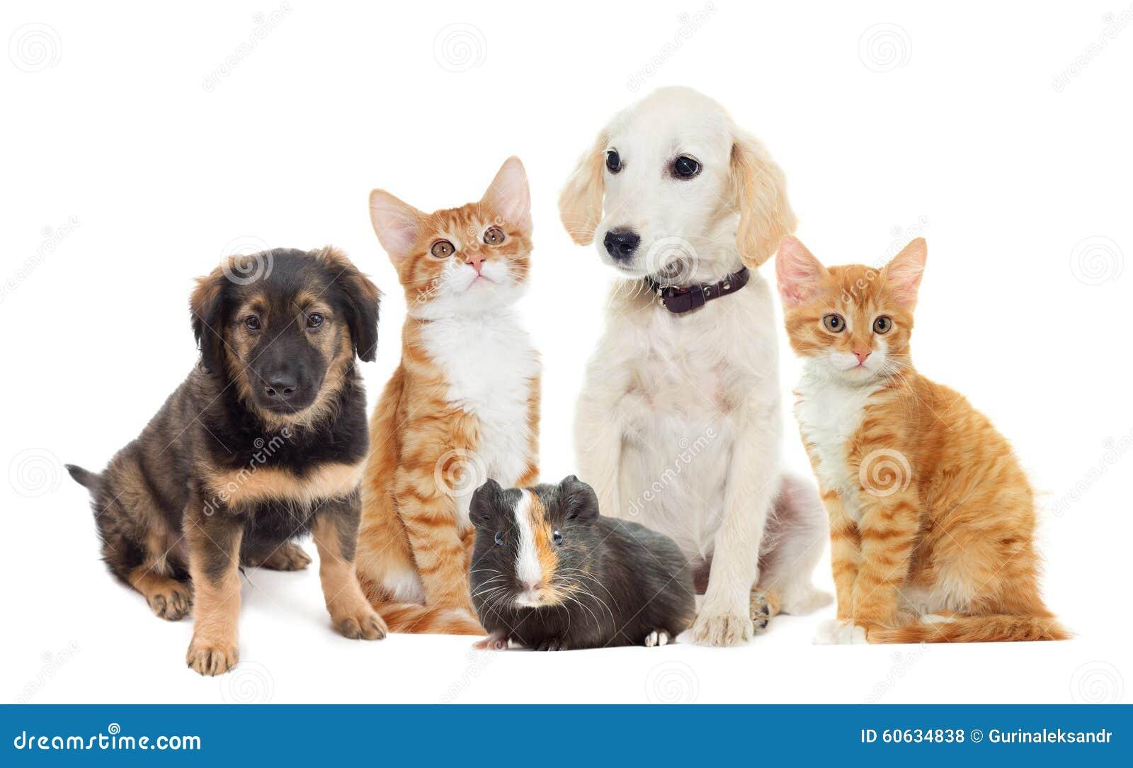 Ställ in husdjur