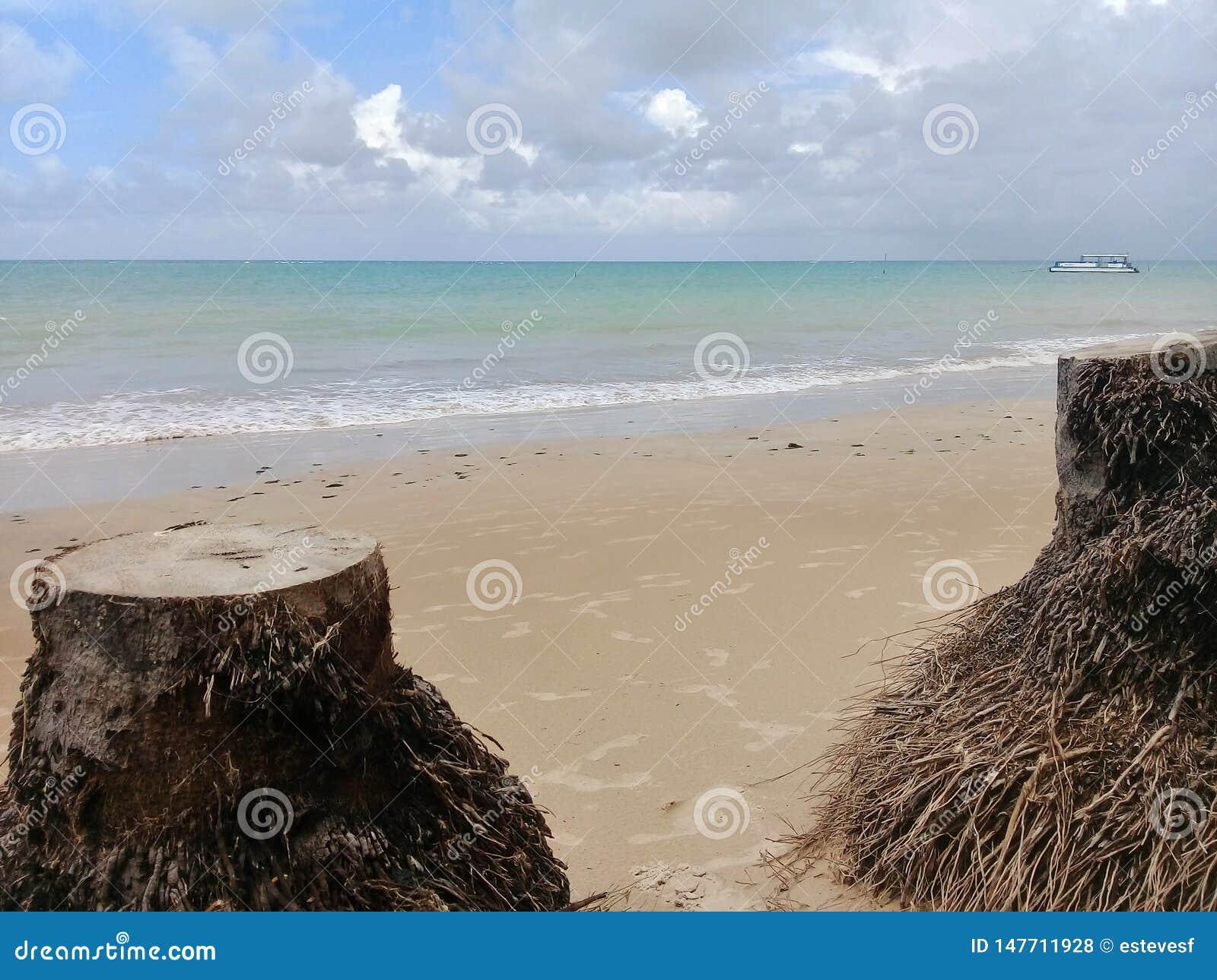 Stämme von cutted Palmen auf dem Strand