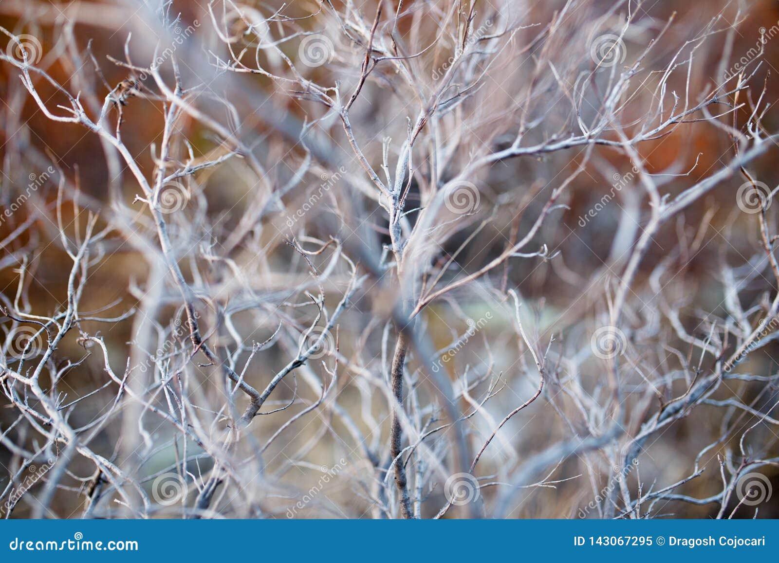Stäng sig upp av det torra filialträdet, makrotextur av en grå torr buske