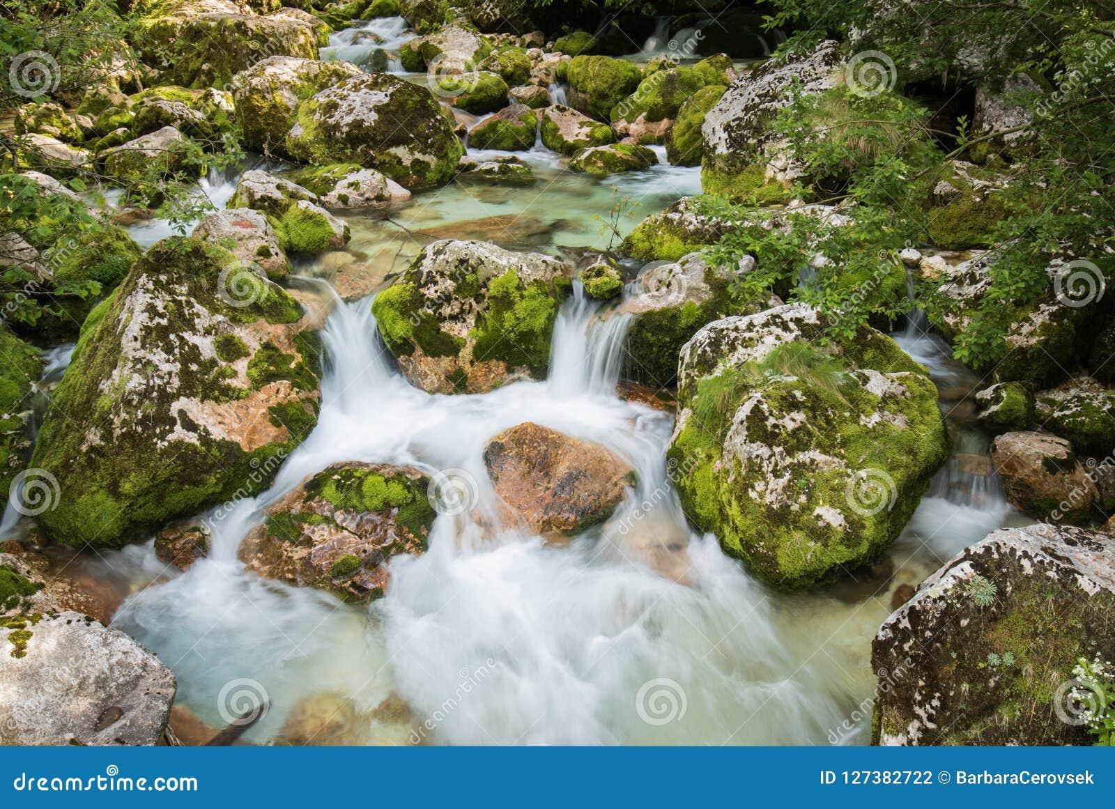 Stäng sig upp av floden Lepenjica i hjärtan av den Lepena dalen, Slovenien