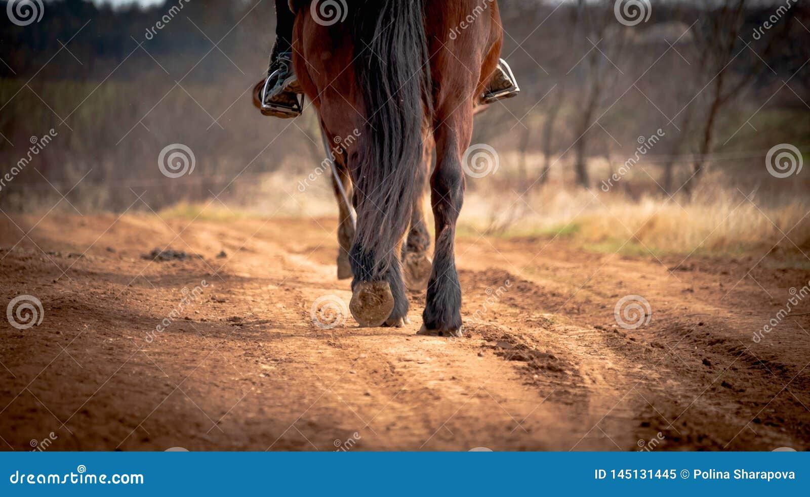 Stäng sig upp klövar av hästen som promenerar banan