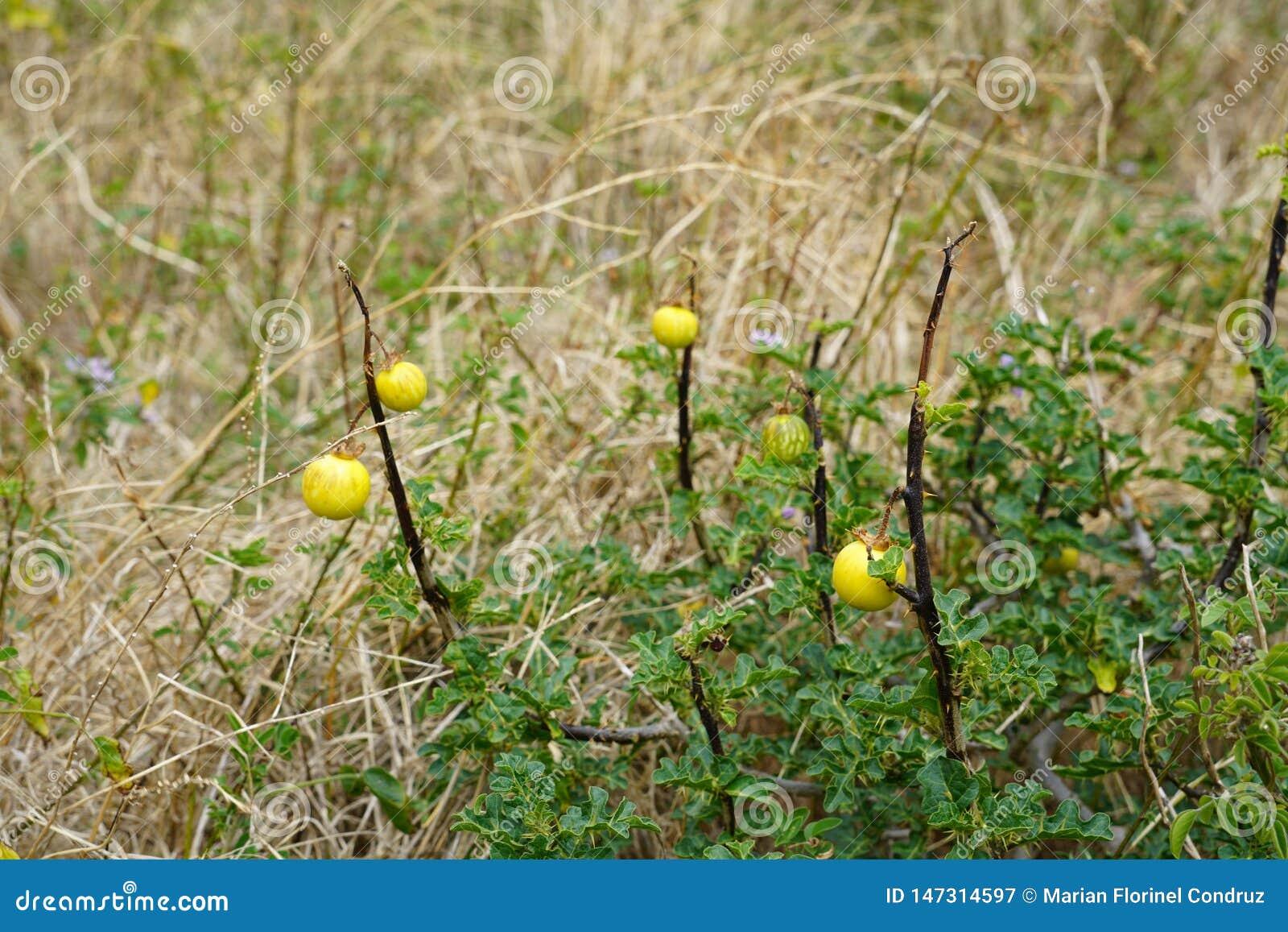 Stäng sig upp med specifik vegetation för madeiran
