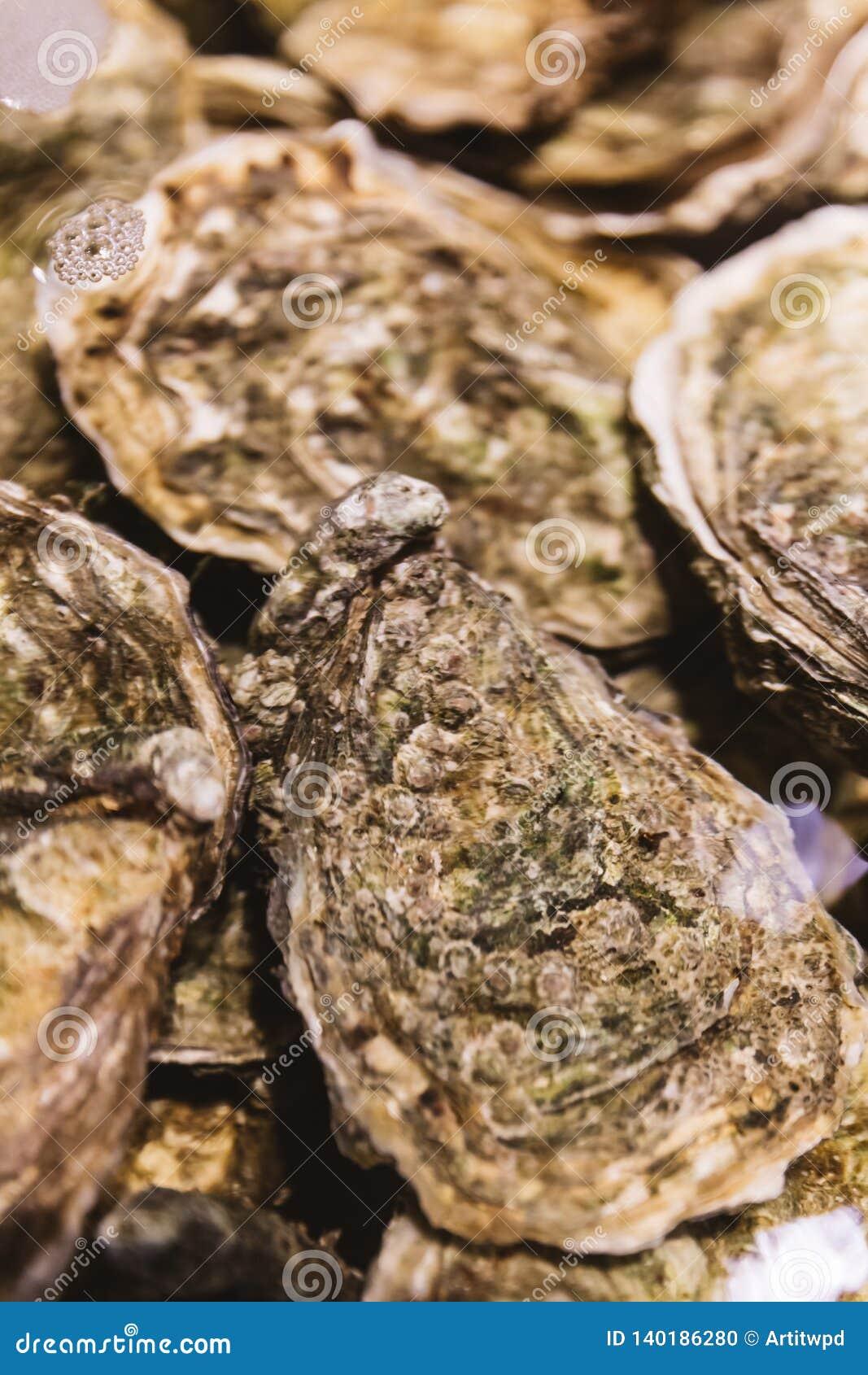 Stäng upp levande och nya ostron i skal under vattnet