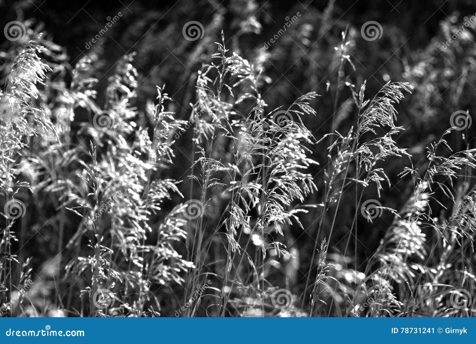 Stäpp i svartvitt