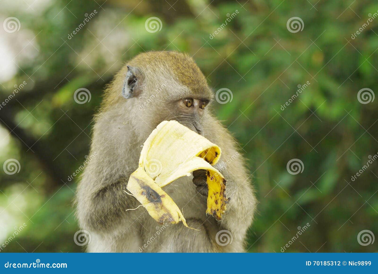 Stående av en apa