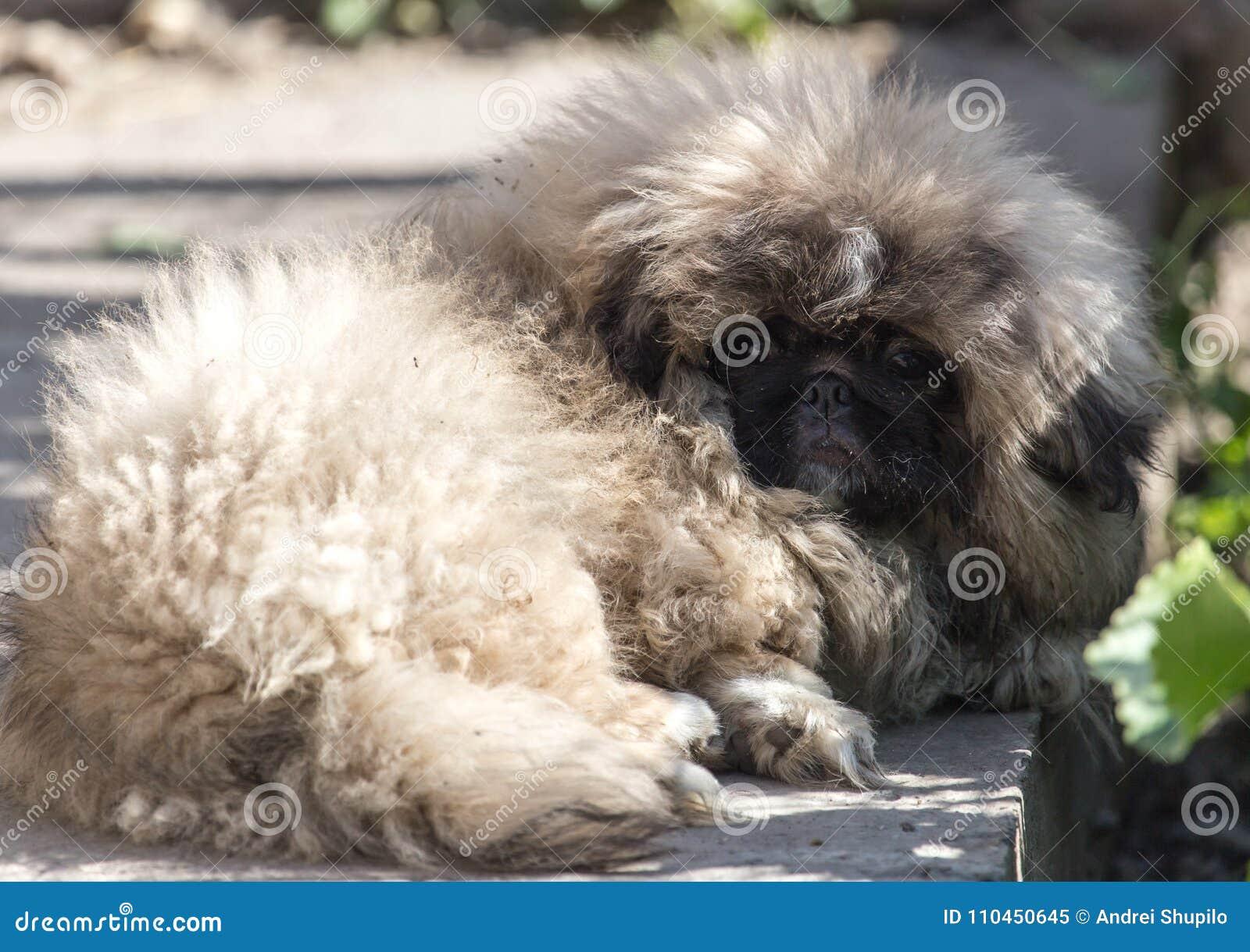 Stående av en fluffig hund