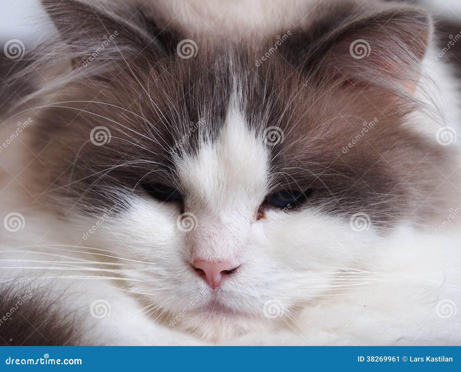 Stående av en katt