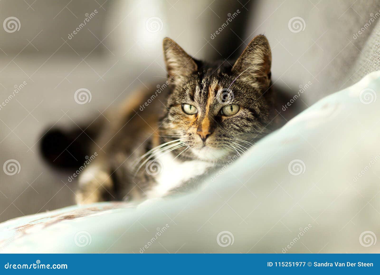 Stående av en lat katt med suddighetsmiljön