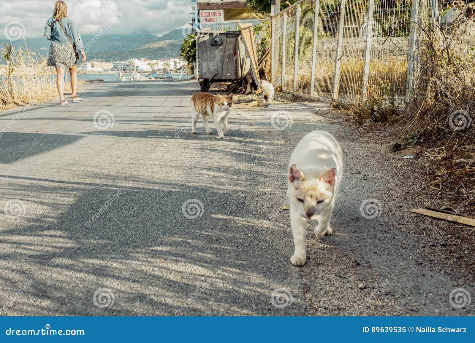 Stående av gatakatter i Kreta Grekland