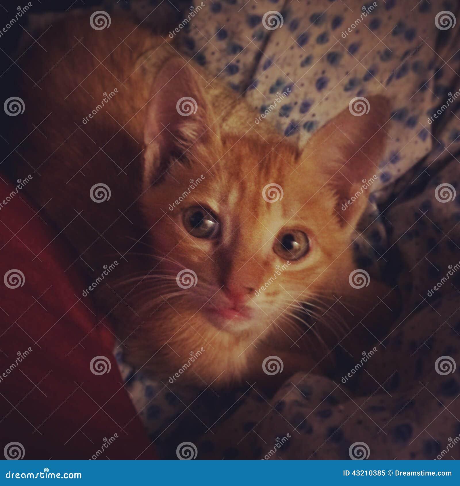 Stående av katten